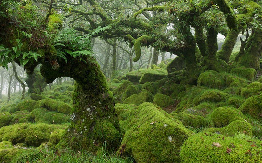 Wistman's Wood Hutan Oak terbesar di Inggris