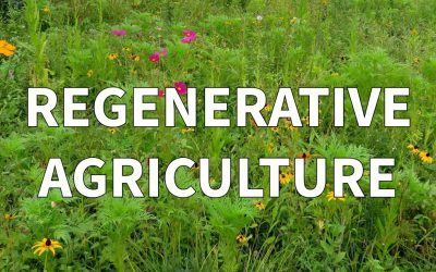 Pertanian Regeneratif Solusi untuk Mode Berkelanjutan